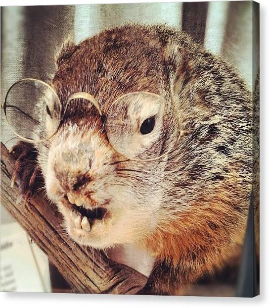 Beavers Canvas Print - A Strange Beaver! #brave #beaver by Pamela Cushman