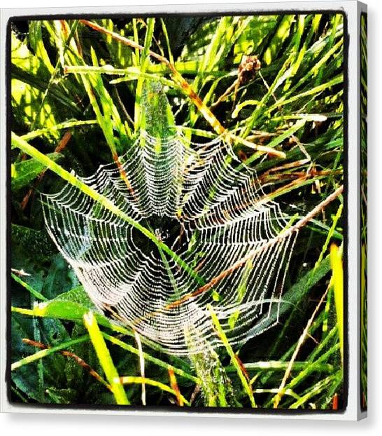 Ontario Canvas Print - A Tiny Spiderweb Hiding In The Grass by Erica Mason