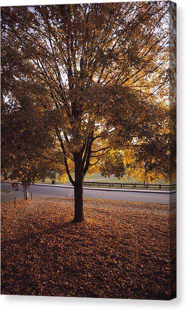 Dartmouth College Canvas Print - A Tree In Autumn Foliage On The Grounds by Sam Abell