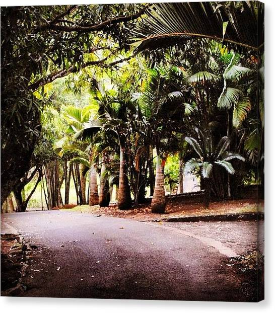 Environment Canvas Print - A Walk By The Palms by Fotocrat Atelier