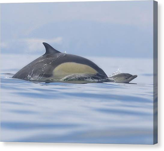 Dolphins Canvas Print - A Watchful Mother by Steve Munch
