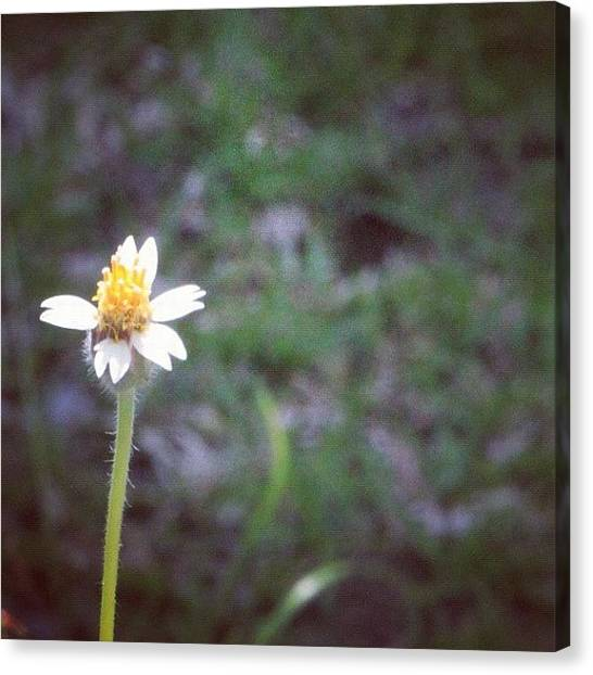 Political Canvas Print - A Wild Flower, Grows Almost Everywhere by Ahmed Oujan