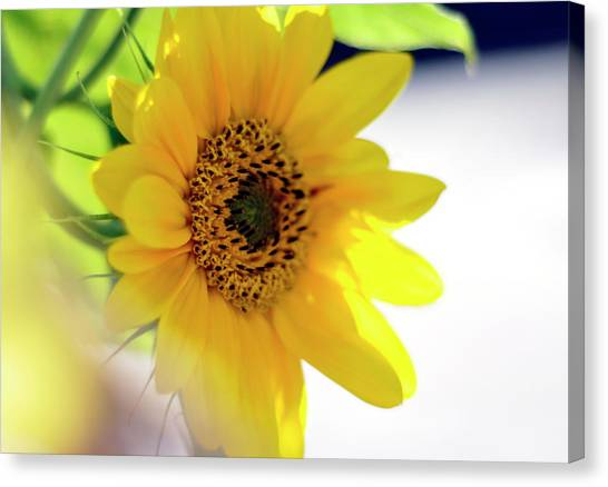 A Wish For Sunshine In Your Day Canvas Print