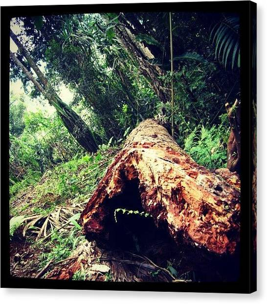 Rainforests Canvas Print - Abandoned Falling Old Tree by Ikhwan Akbar
