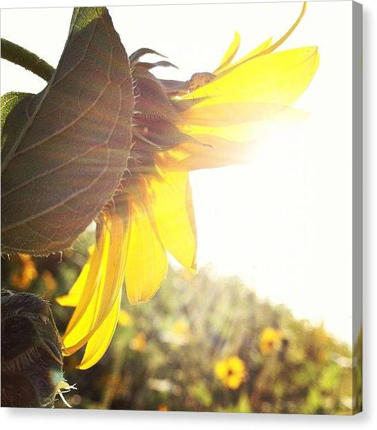 Abstract Landscape Canvas Print - #abstract #flower #instanature by Eric Greer