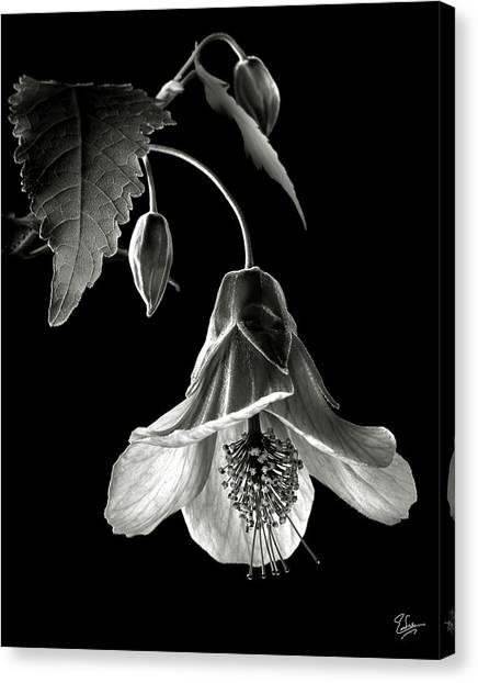 Abutilon In Black And White Canvas Print