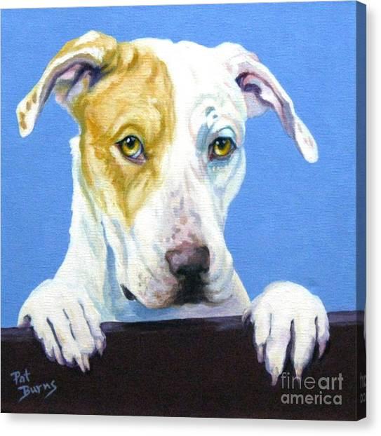 Ac Pup Canvas Print by Pat Burns