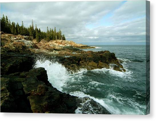 Acadia On The Shore Canvas Print