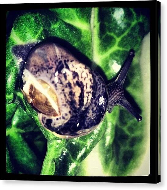 Salad Canvas Print - Accidental Escargot by Melissa Lyons