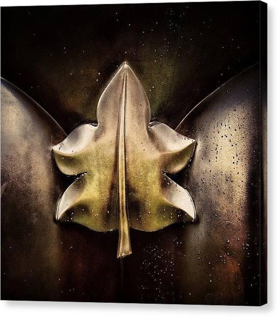 Rain Canvas Print - Adam Leaf From Botero's Male Torso - by Joel Lopez