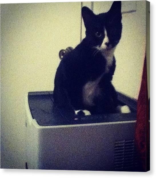 Printers Canvas Print - #adorable!! #printer #cat by Megan Petroski