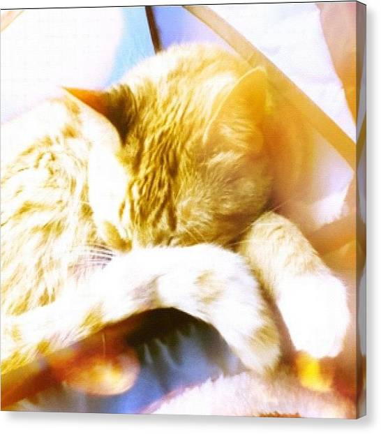 Kiss Canvas Print - Adorable Sleeping Kitty by Kayla Mitchell
