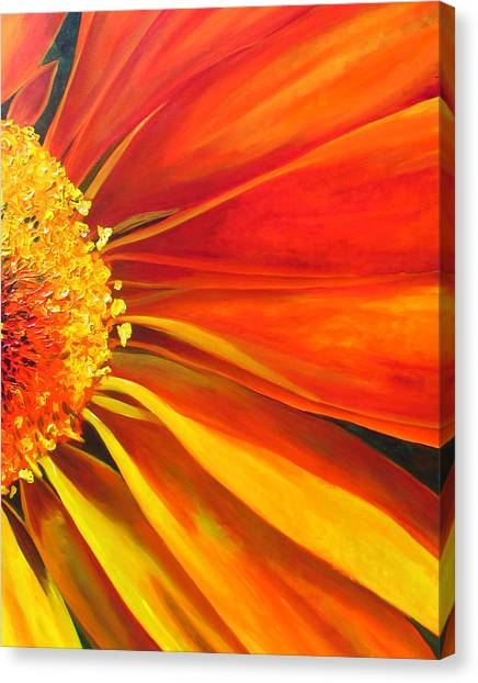 African Daisy Canvas Print by Raette Meredith