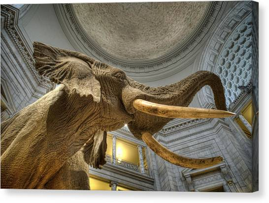 Smithsonian Museum Canvas Print - African Elephant by Jim Pearson