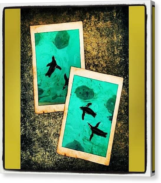 Penguins Canvas Print - African Penguin's.... #penguins by Mr. B