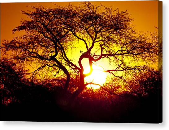 African Tree Canvas Print