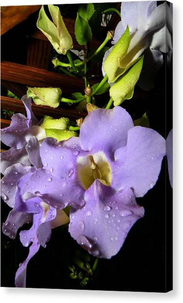 After The Rain Canvas Print by Jose Rodriguez