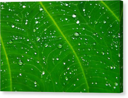 After The Rain Canvas Print by Michael Krahl