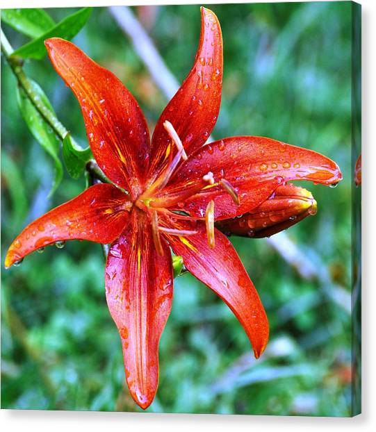 After The Rain Canvas Print by Terri Albertson