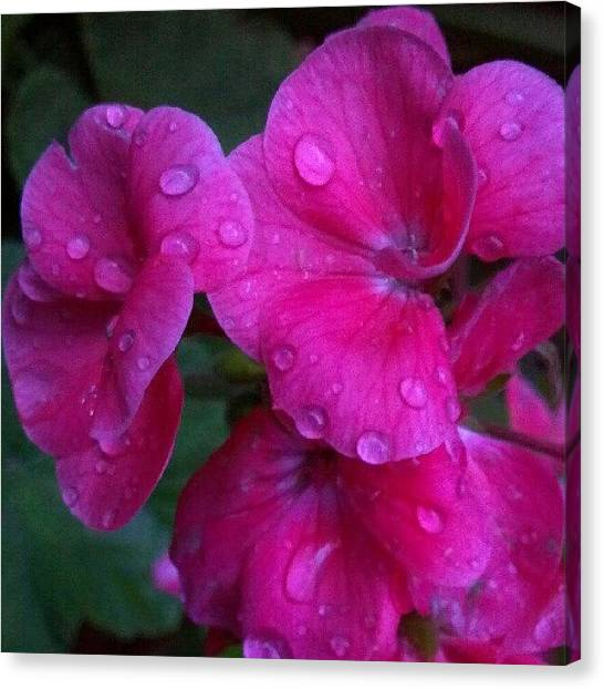 Droid Canvas Print - After The #rain #water #drops On The by Carla From Central Va  Usa