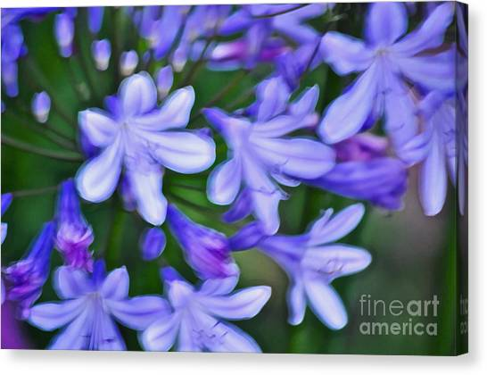 The Nile Canvas Print - Agapanthus by Gwyn Newcombe