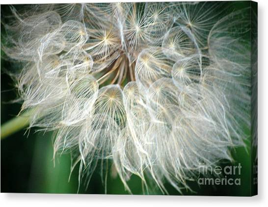 Airy Canvas Print