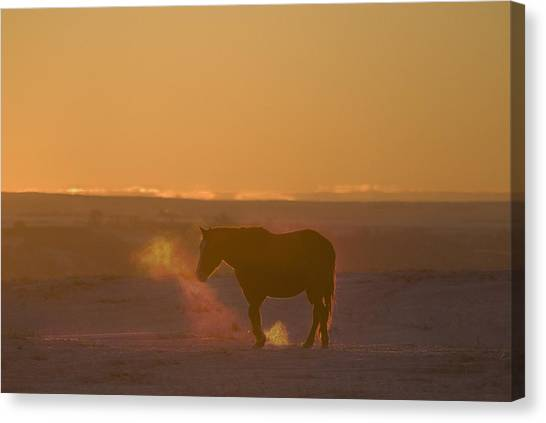 Prairie Sunsets Canvas Print - Alberta, Canada Horse At Sunset by Philippe Widling