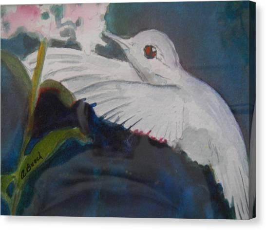 Albino Humingbird Canvas Print