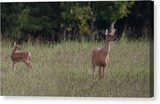 Alert Doe And Fawn Canvas Print