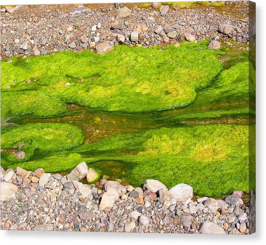 Algae Bloom Natural Abstract Art Of Nature Canvas Print by Merton Allen
