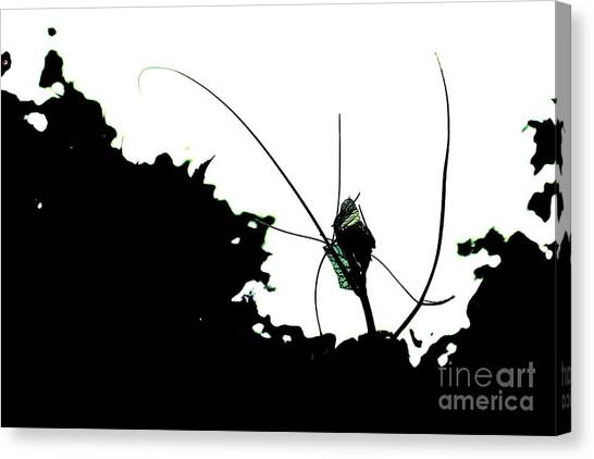 Alien Garden Canvas Print by Allen Sindlinger