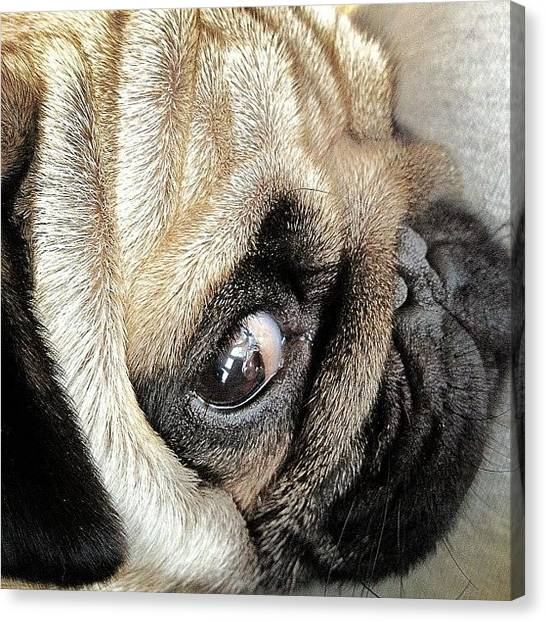 Pugs Canvas Print - Alien Species!! Our Lovely Harley ☺ by Ady Griggs