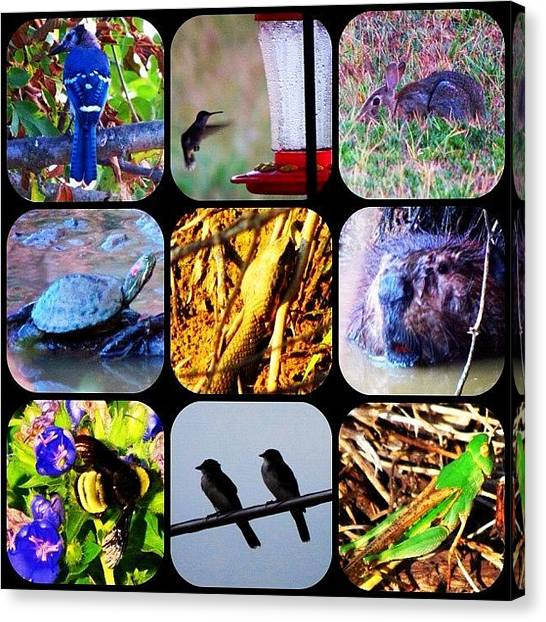 Arkansas Canvas Print - All Critters, All Yesterday, All In My by Roger Snook