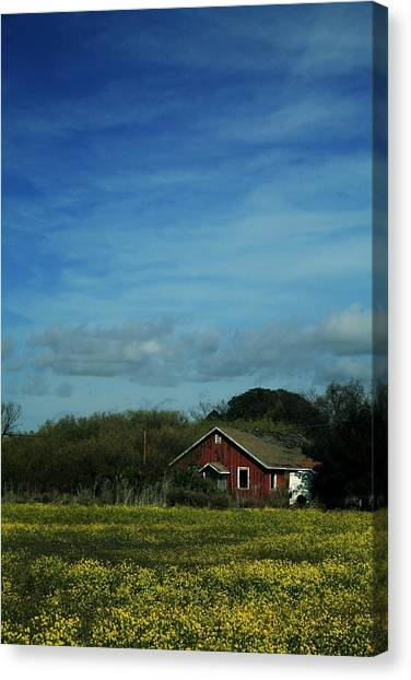 Mustard Canvas Print - All That Yellow by Laurie Search