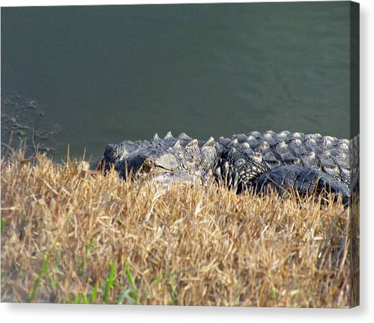 Alligator Eyes Canvas Print