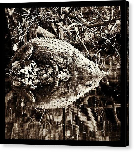 Swamps Canvas Print - #alligator #gator #everglades #florida by Troy Thomas