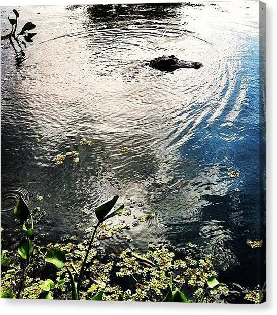 Bayous Canvas Print - Alligator In The Bayou by Caitlyn Stykowski