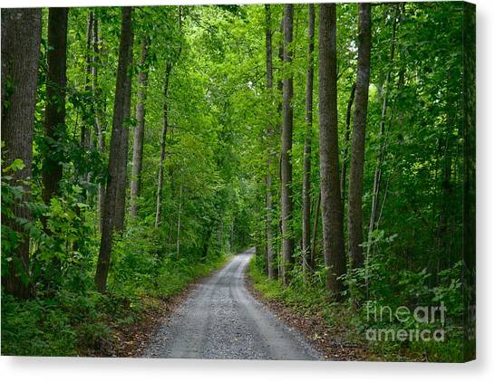 The Road To Thomas Jefferson's House Canvas Print