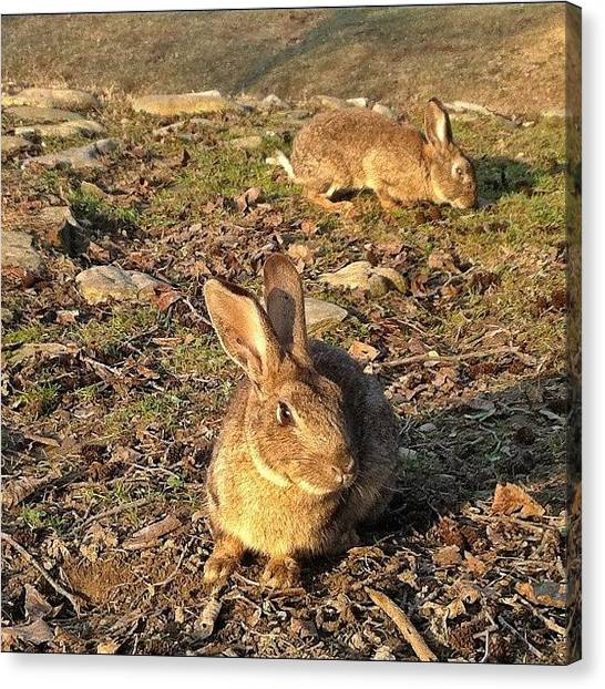 Rabbits Canvas Print - Altrove. Elsewhere by Francesca Sara