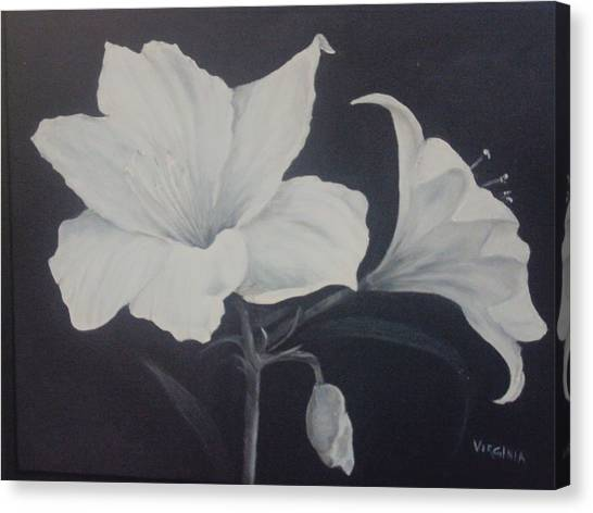 Amaryllis Canvas Print by Virginia Butler
