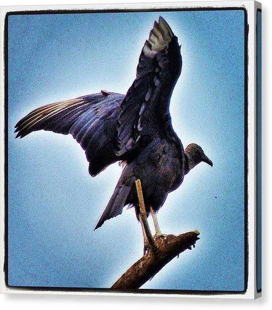 Vultures Canvas Print - Amazing #bird Of #prey! by Manan Shah