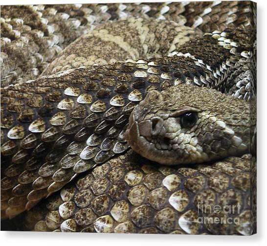Poisonous Snakes Canvas Print - Ambush by Joe Jake Pratt