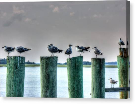 Amelia Island Locals Canvas Print by Barry Jones