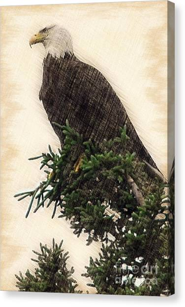 American Bald Eagle In Tree Canvas Print