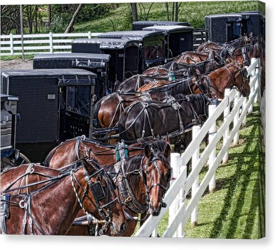 Bay Horse Canvas Print - Amish Parking Lot by Tom Mc Nemar
