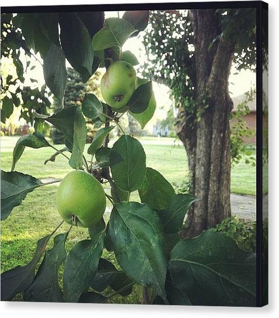 Iowa Canvas Print - An Apple A Day... Leave You Hungry For by Jackie Ayala