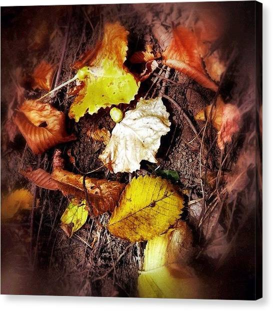 Manitoba Canvas Print - An Assortment Of Fall Leaves by Jessica Mutimer