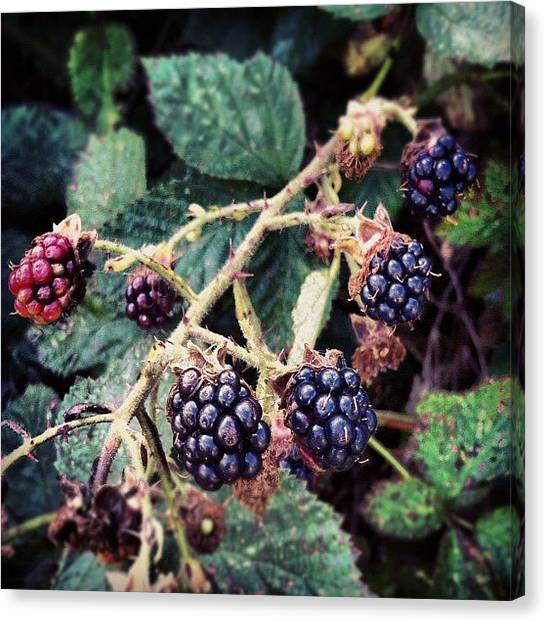 Berries Canvas Print - An Early Crop by Chloe Stickland