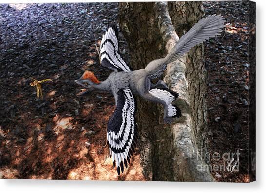 Anchiornis Huxleyi  Canvas Print