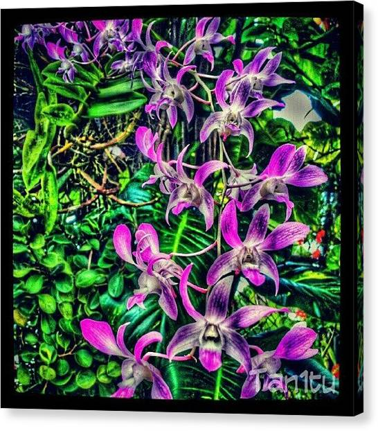 Orchids Canvas Print - #androidphotography #igpuertorico by Tania Torres